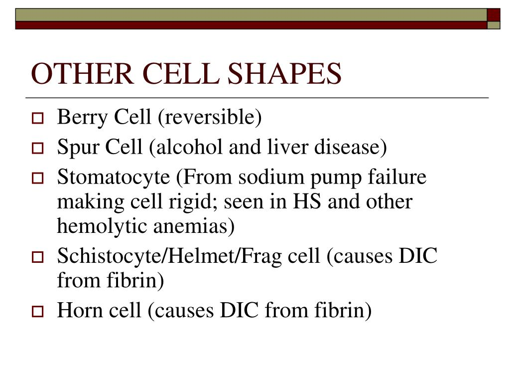 OTHER CELL SHAPES