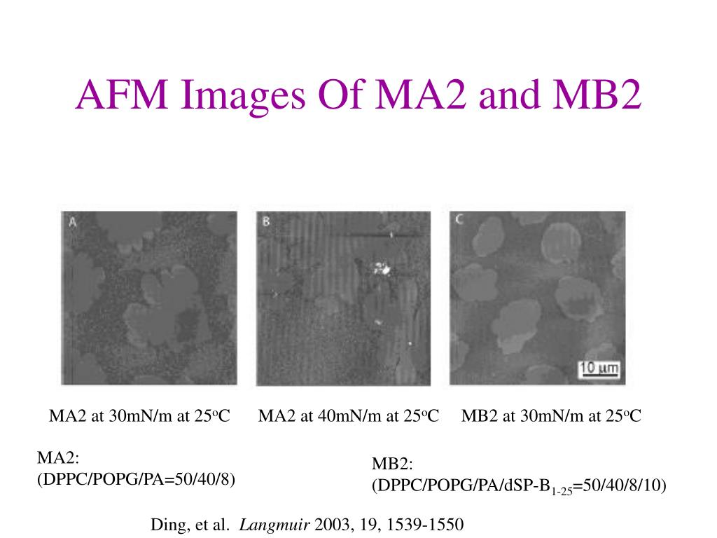 AFM Images Of MA2 and MB2
