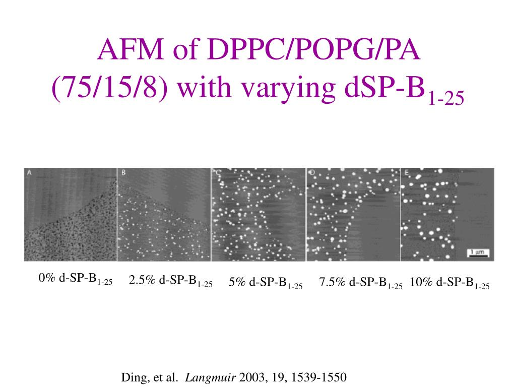 AFM of DPPC/POPG/PA (75/15/8) with varying dSP-B