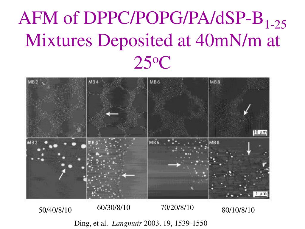 AFM of DPPC/POPG/PA/dSP-B