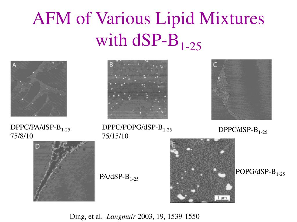 AFM of Various Lipid Mixtures with dSP-B