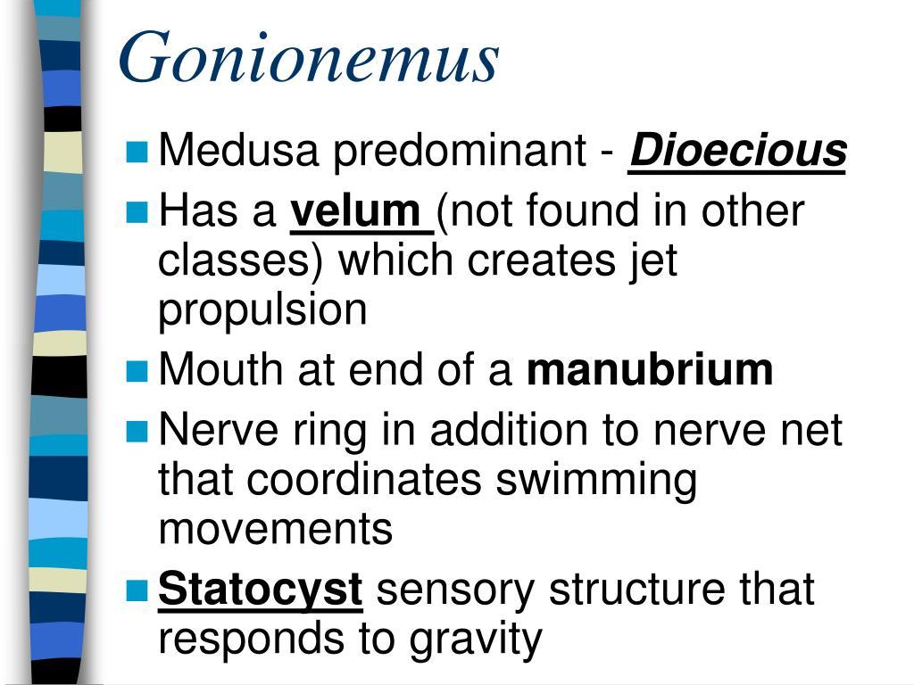 Gonionemus