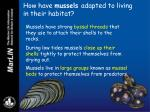 how have mussels adapted to living in their habitat