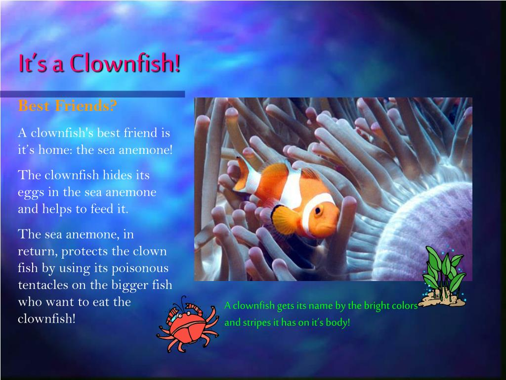 It's a Clownfish!