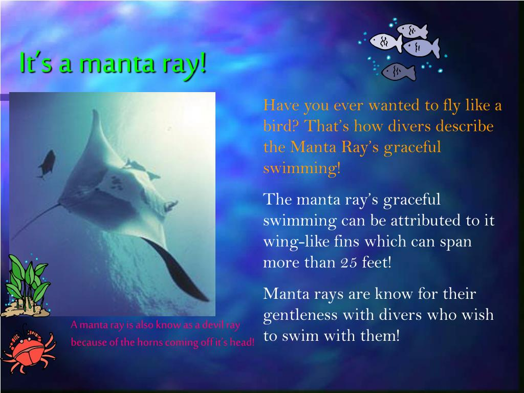 It's a manta ray!