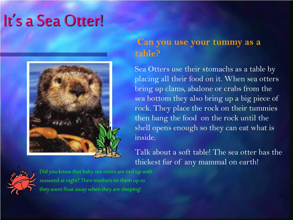 It's a Sea Otter!