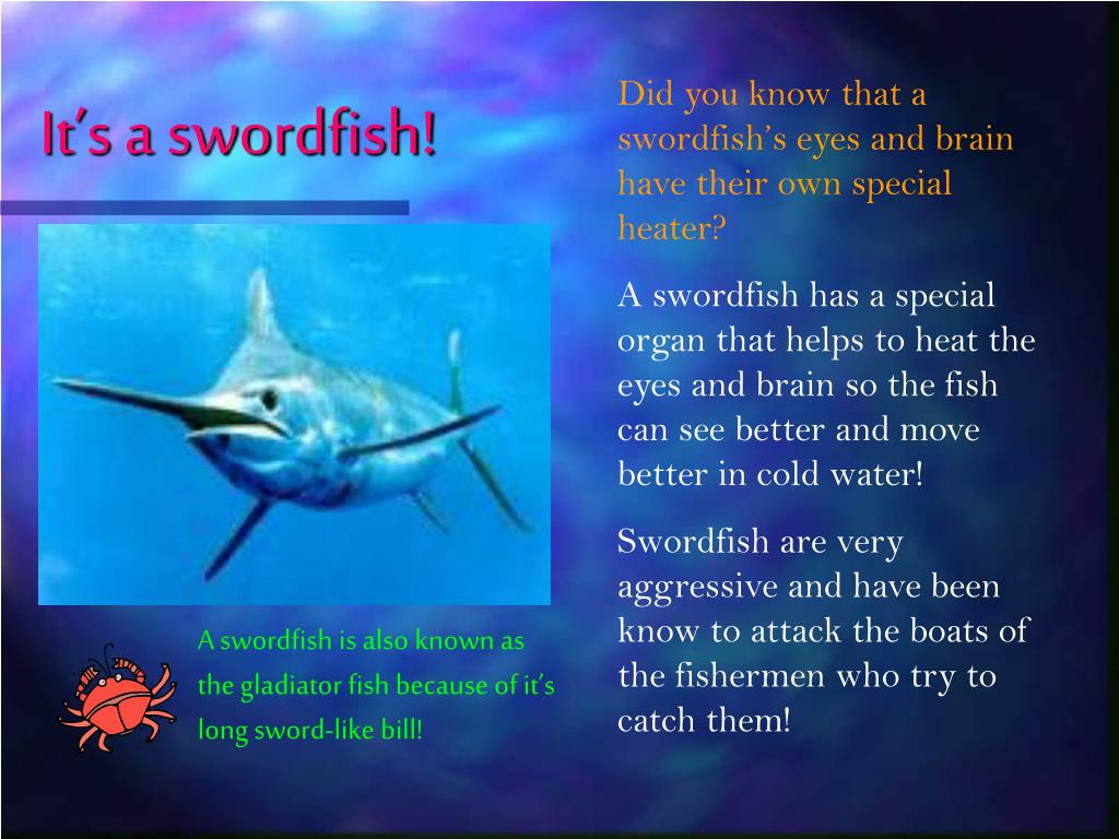 It's a swordfish!
