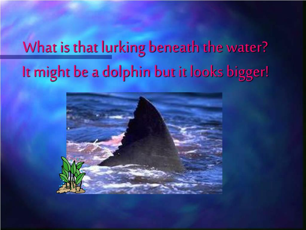 What is that lurking beneath the water? It might be a dolphin but it looks bigger!
