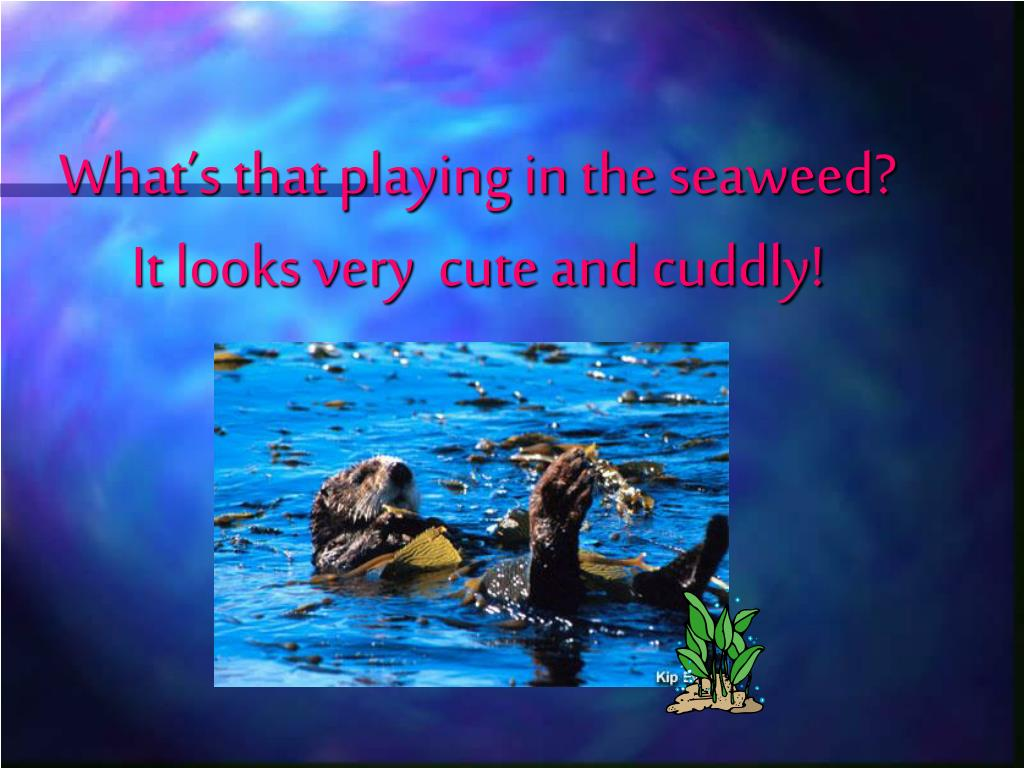 What's that playing in the seaweed? It looks very  cute and cuddly!