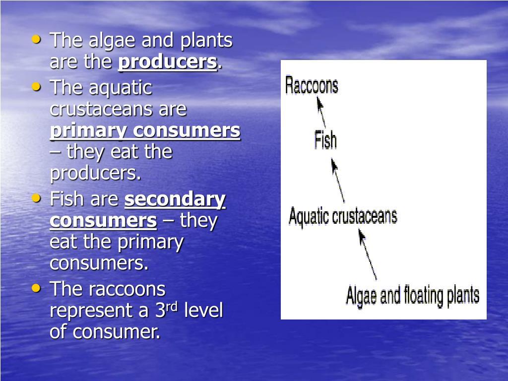 The algae and plants are the