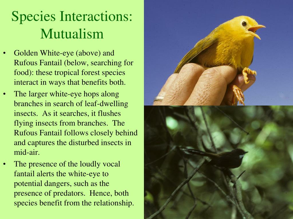 Species Interactions: Mutualism