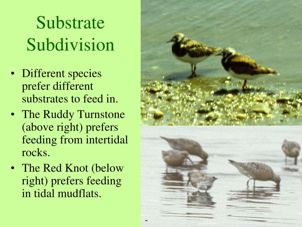 Substrate Subdivision