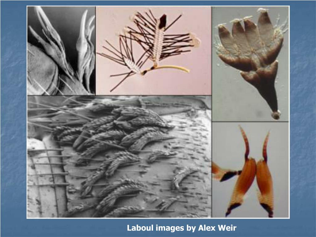 Laboul images by Alex Weir