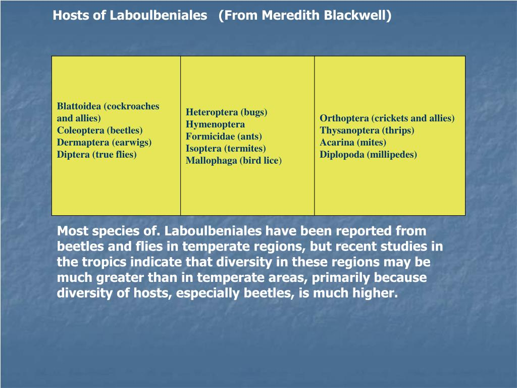Hosts of Laboulbeniales   (From Meredith Blackwell)