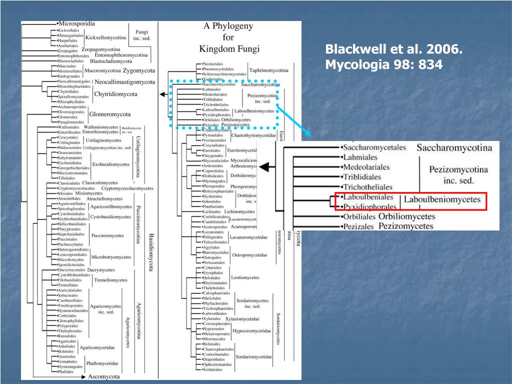 Blackwell et al. 2006.  Mycologia 98: 834