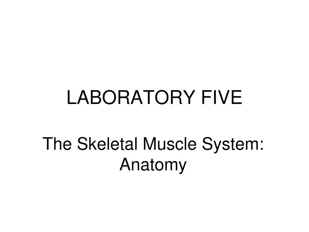 laboratory five