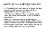 muscle action and origin insertion