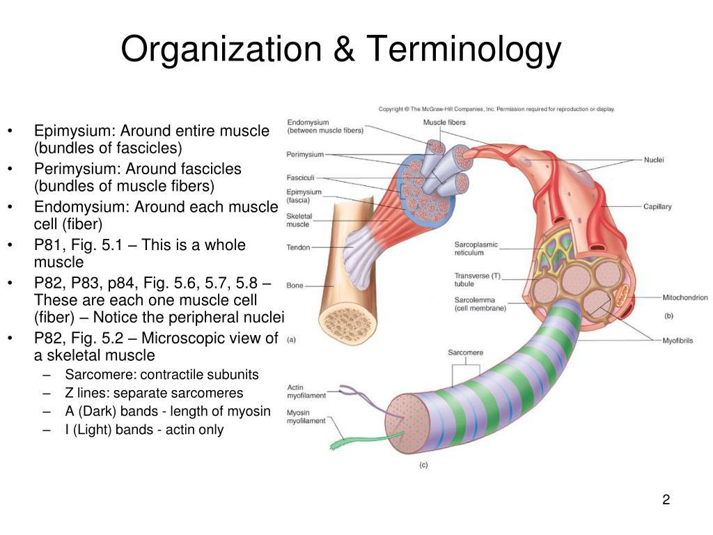 Organization & Terminology