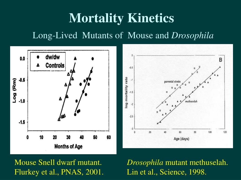 Mortality Kinetics