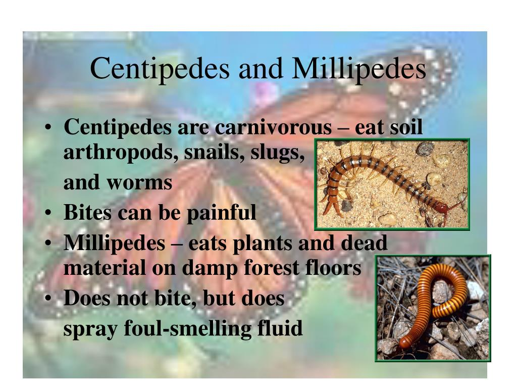 Centipedes and Millipedes