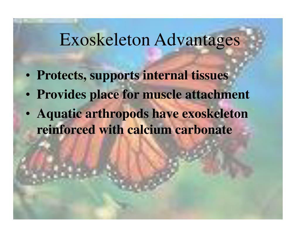 Exoskeleton Advantages