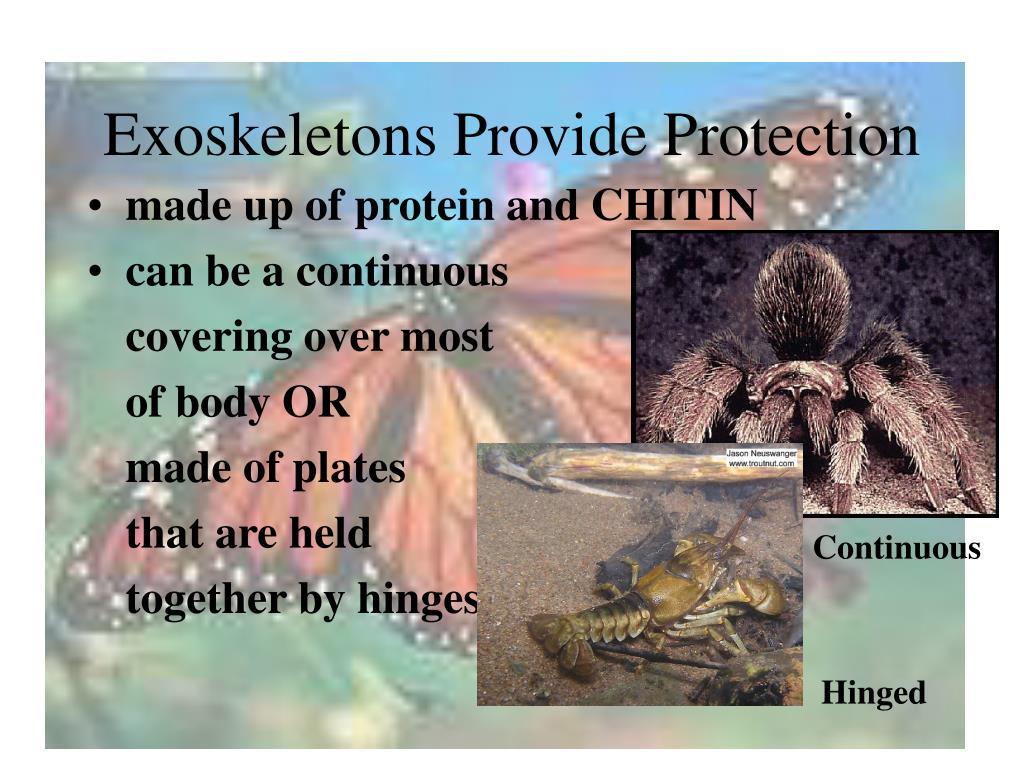 Exoskeletons Provide Protection