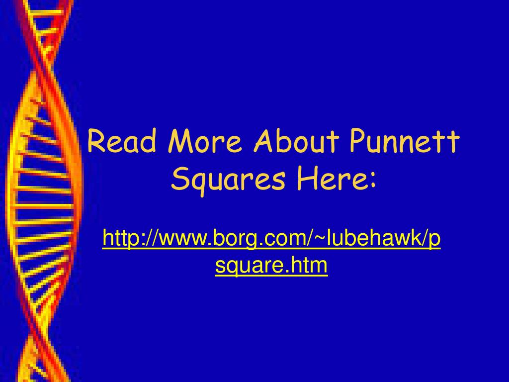 Read More About Punnett Squares Here: