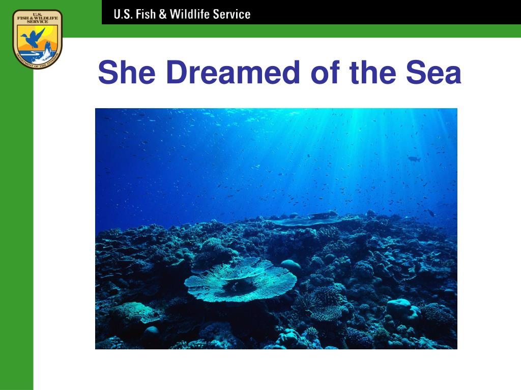 She Dreamed of the Sea