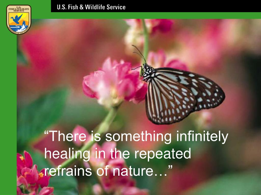 """""""There is something infinitely healing in the repeated refrains of nature…"""""""