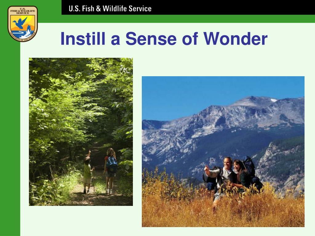 Instill a Sense of Wonder
