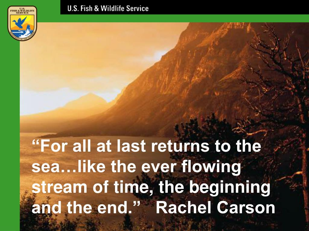 """""""For all at last returns to the sea…like the ever flowing stream of time, the beginning and the end.""""   Rachel Carson"""