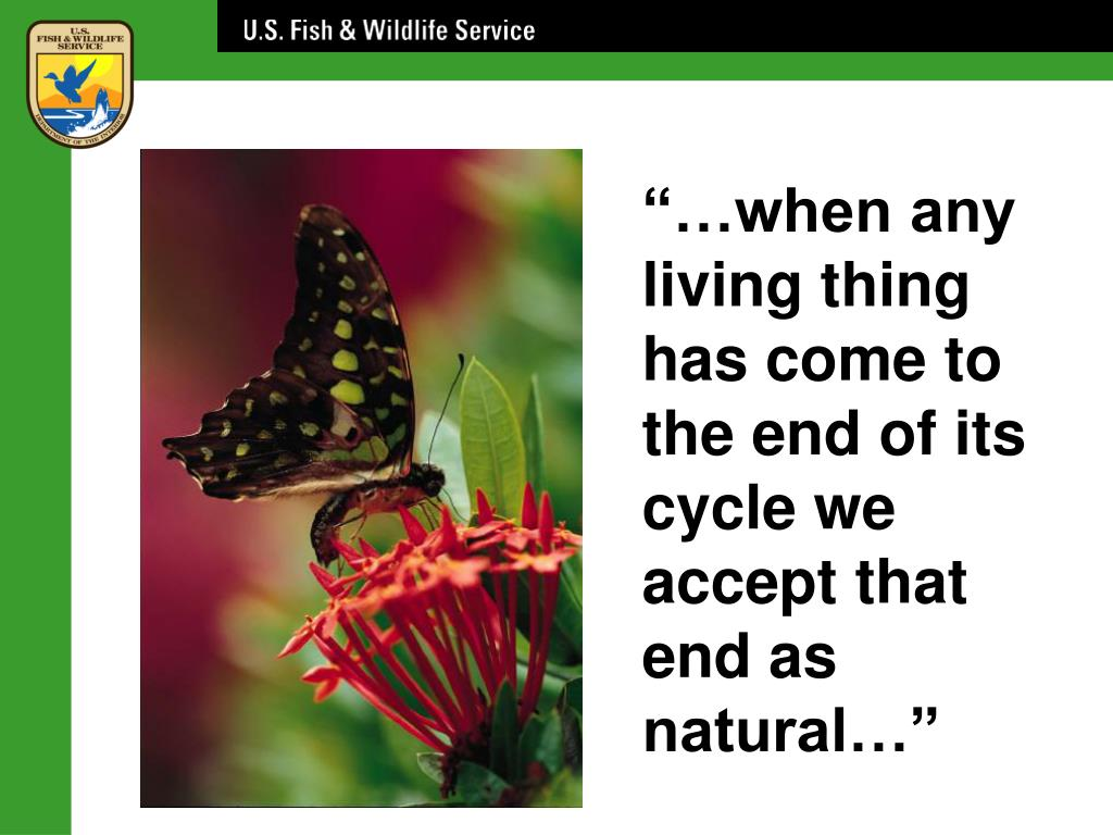 """""""…when any living thing has come to the end of its cycle we"""