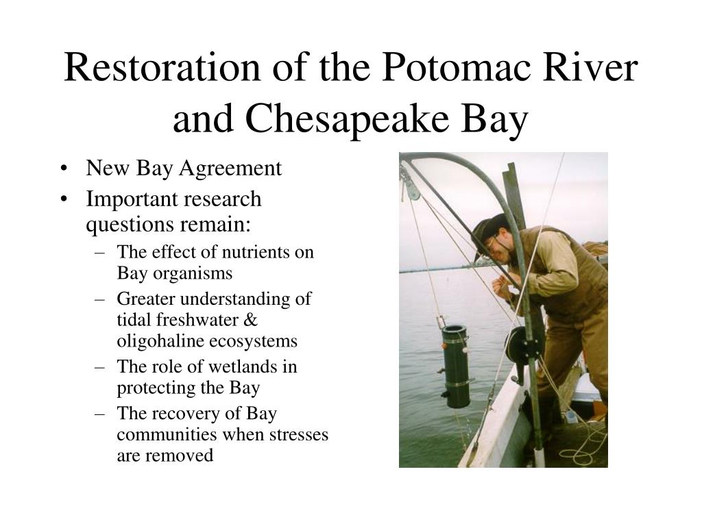 Restoration of the Potomac River and Chesapeake Bay