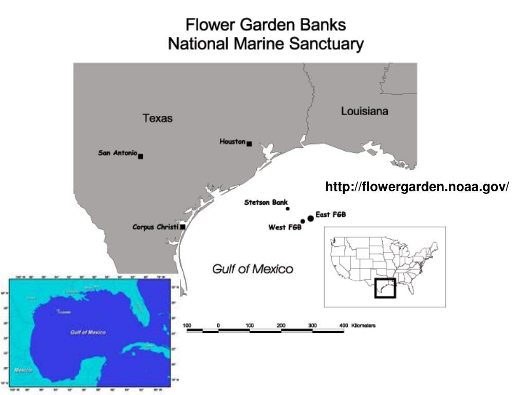http://flowergarden.noaa.gov/