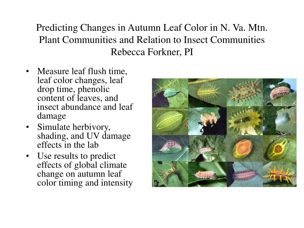 Predicting Changes in Autumn Leaf Color in N. Va. Mtn. Plant Communities and Relation to Insect Communities