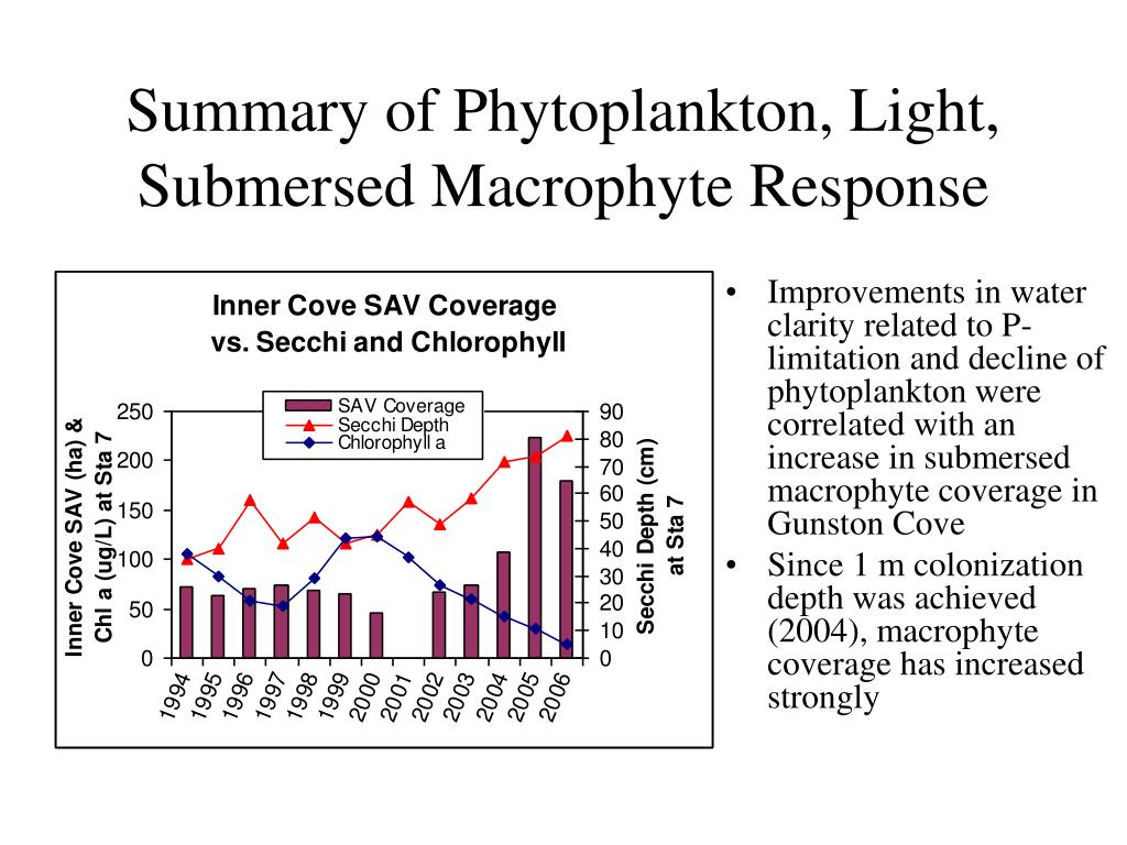 Summary of Phytoplankton, Light, Submersed Macrophyte Response