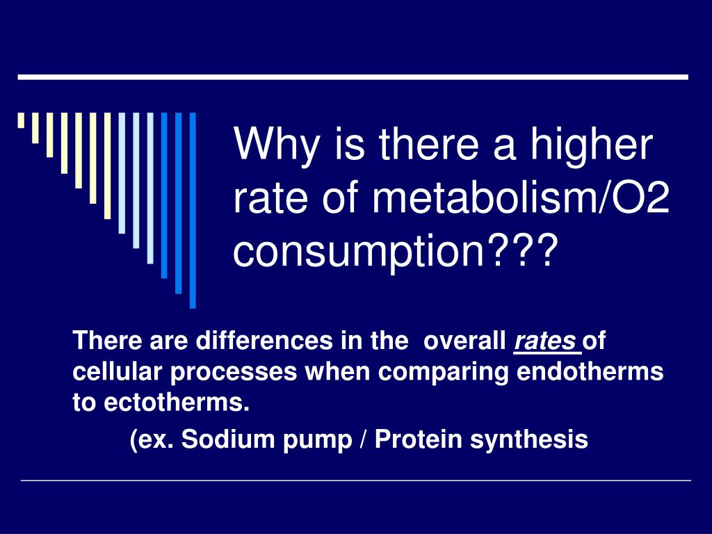 Why is there a higher rate of metabolism/O2 consumption???
