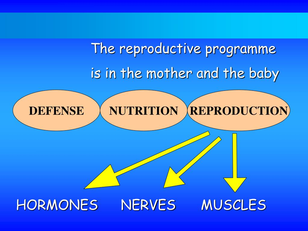 The reproductive programme