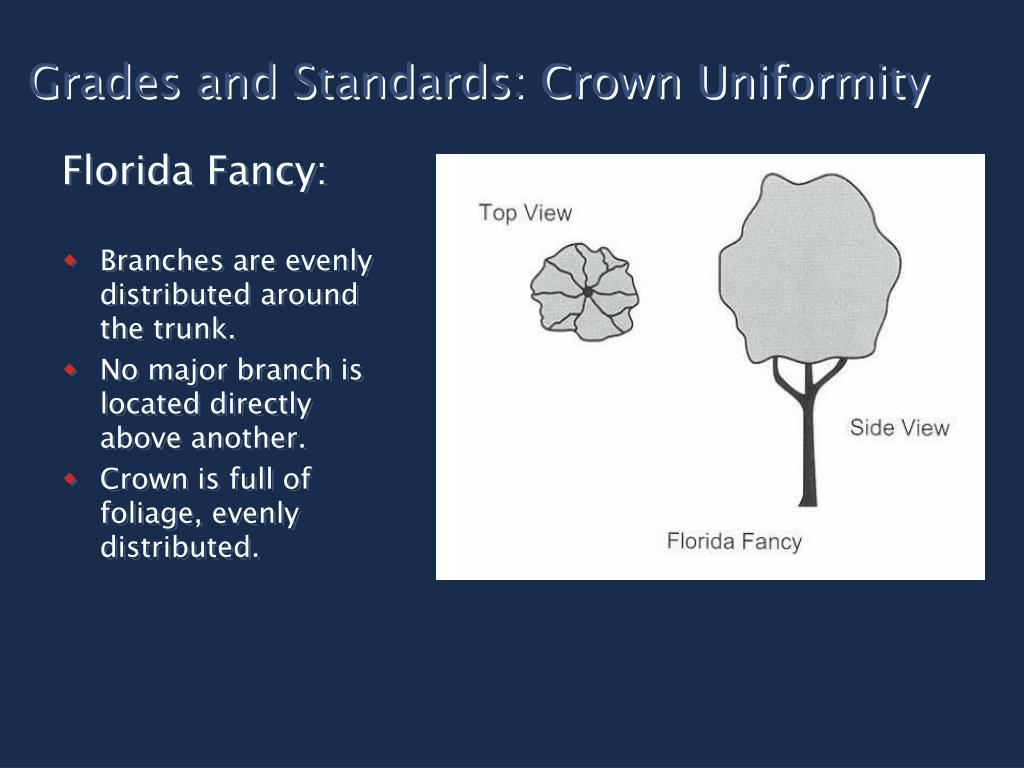 Grades and Standards: Crown Uniformity