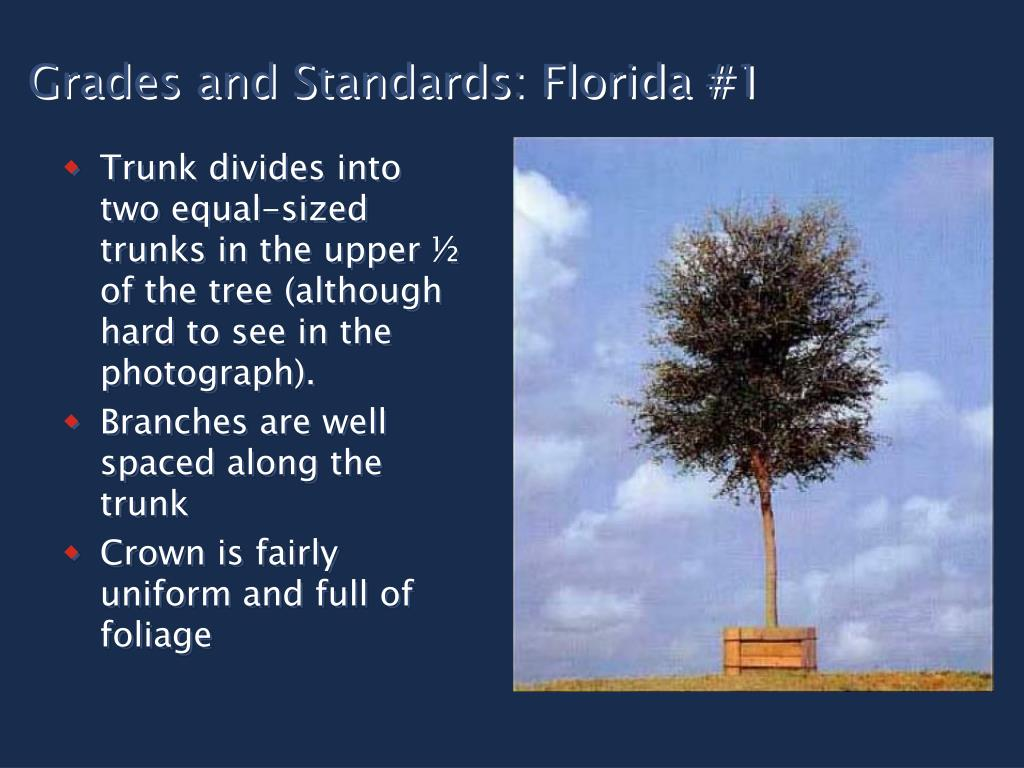 Grades and Standards: Florida #1