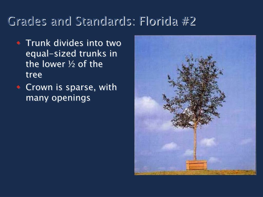 Grades and Standards: Florida #2