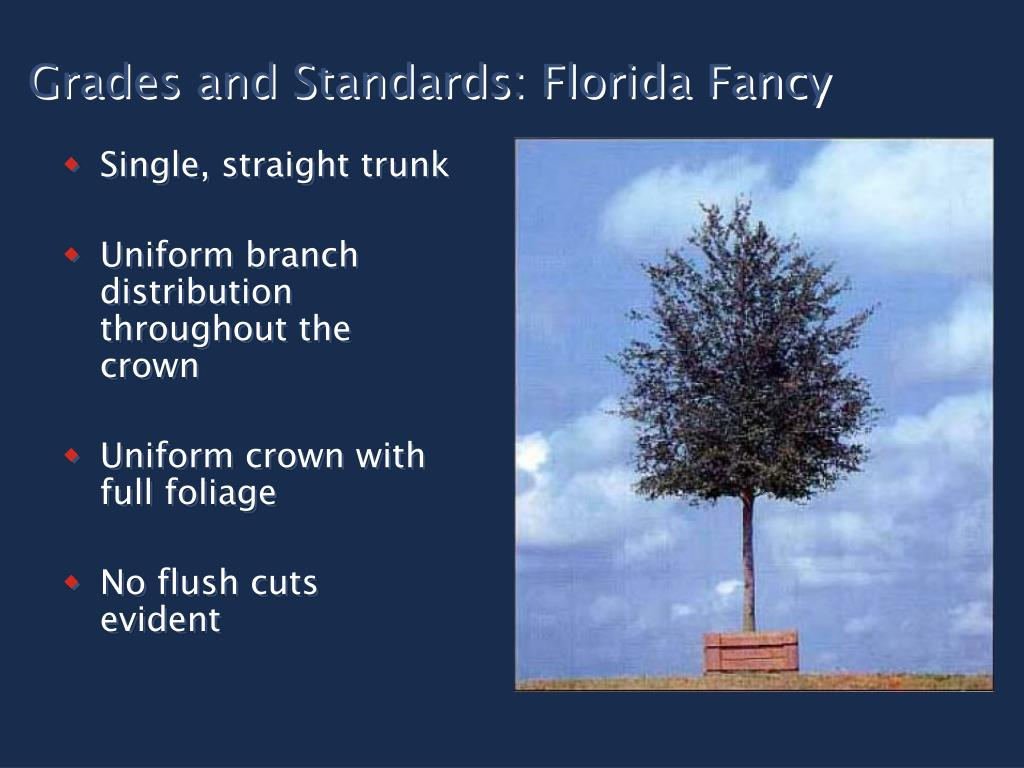 Grades and Standards: Florida Fancy