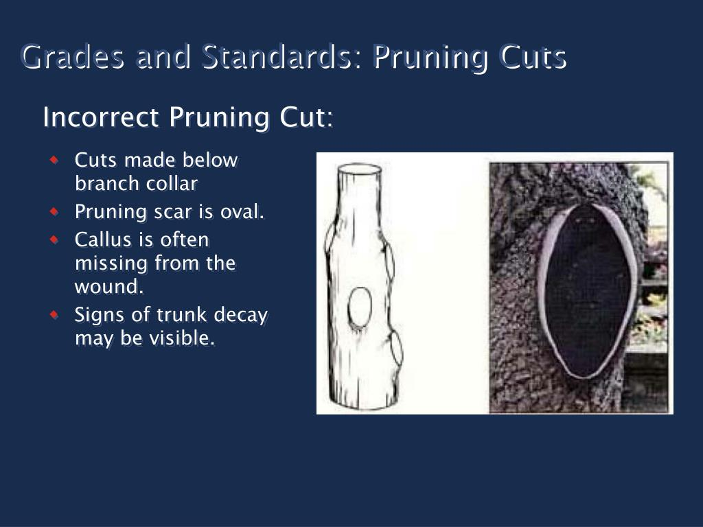 Grades and Standards: Pruning Cuts