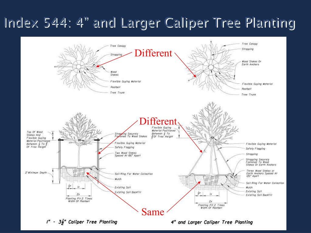 "Index 544: 4"" and Larger Caliper Tree Planting"