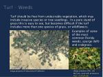 turf weeds