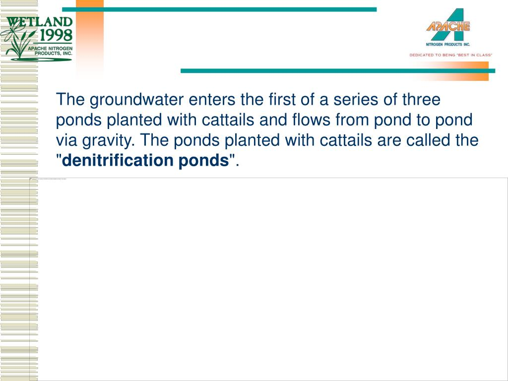 The groundwater enters the first of a series of three ponds planted with cattails and flows from pond to pond via gravity. The ponds planted with cattails are called the ""