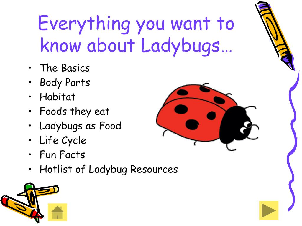 Everything you want to know about Ladybugs…