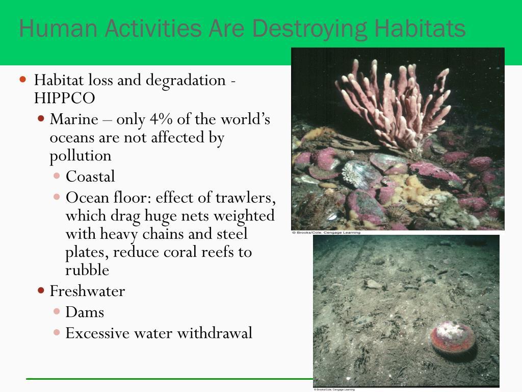 Human Activities Are Destroying Habitats