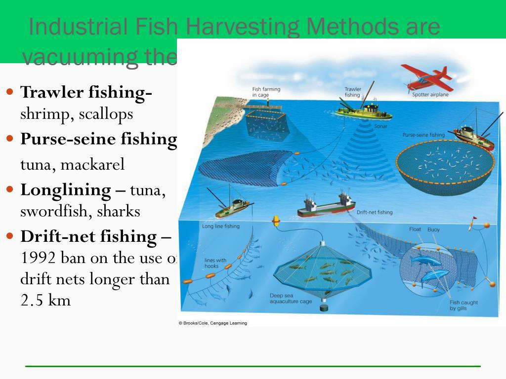 Industrial Fish Harvesting Methods are vacuuming the seas