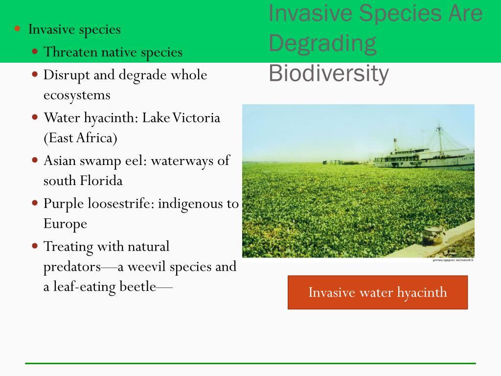 Invasive Species Are Degrading Biodiversity